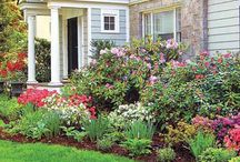 Landscaping - Front yard / by Connie Sheane