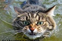 Kitties, yes kitties! / by Kari Martin