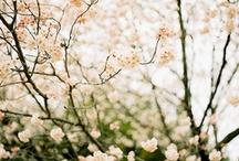 Pretty / by Carley Preston