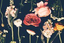 Pretty / Pretty people and things  / by Natosha Buchanan