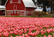 barns and flowers / by Linda Fredrickson