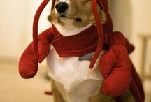 Dogs in Costume / by Desak Putu Hita Karina Riadika Mastra