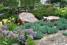 Xeriscape/Drought Tolerant Landscaping / by Allison Lott