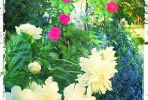 Gardens & flowers / by Dr. Pam