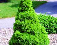 Green Thumb / by Cassandra Avery