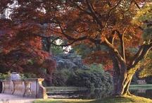 Autumn / by Linda Sandage