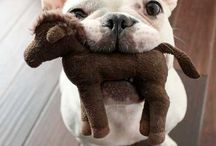 Feeding My Frenchie Obsession  / by Casey Moser