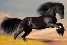 Dreamy Horses / by Caitlin Cody