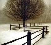 Trees / by Carol Deaville