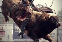 bull riding / by Dawn Sisson