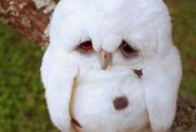 Owlies / by Melissa Thompson