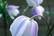Shade Loving Plants / by Pam Garmon