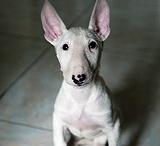 Animal Cuties / by Deb Floros