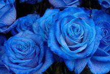Blue, too / by Shelley H