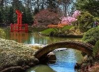 Japanese Garden / by Brooklyn Botanic Garden
