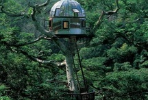 Treehouses / by Kelly Walsh Hails