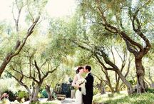 Photography: Engagement/ Wedding  / by Sarah Plaksey