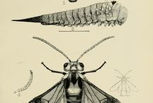 insects historic vintage / by sidhefilz