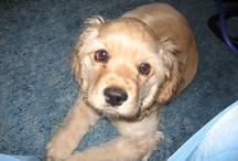 My puppy / by Brandi Sargent