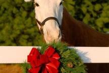 horses / by Dragonfly Saddlery