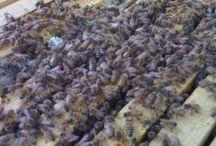 bees / by Rachel Perez