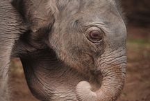 Elephants / by Sam Hamp