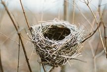 nests / by Liz Rodriguez