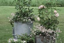 garden bliss / by Jill Palumbo