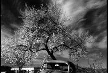 Photography I Like / by mel layman