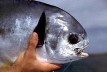 Beautiful Fish of the Bahamas / by Small Hope Bay Lodge
