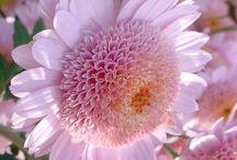 Fleurs / by Carmen Gosselin
