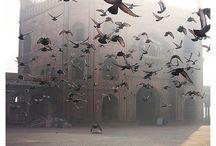 Photography {Animals: Birds} / by Danielle Ward