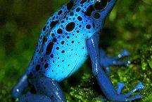 Frogs / by satiah Swedenskey