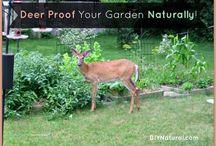 Garden Predators / by Alicia Cox