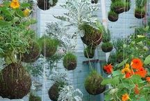 green gardening / gardening ideas, decoration, etc / by Kristin D