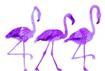 Purple  / by Jane Hawley