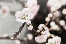 BLOSSOM / by Ak Tl