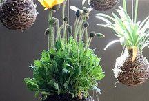 Mis plantas. / by Alma Villarreal