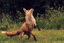 Wildlife / by Bradley Portnoy