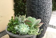 Succulents / by Mary Sullivan