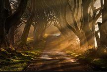 pathways ~ / by Loretta Cohen