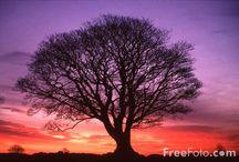 Sunsets/Sunrises / by Sharron Cain
