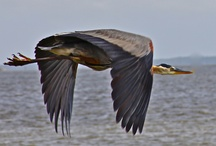 Large Wings / by Avril Dudley