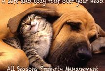 All Seasons Pets / Cute pets talk about our company! / by All Seasons LLC CRMC