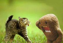 cute animals / grappige schattige en leuke dieren / by sterre zonneveld