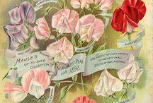 Vintage Stamps / by Linda Kupstas