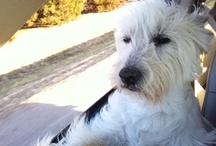 Pet Pals / by KAKE News