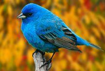 birds / by Becky Rardin