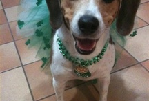 St. Patty's Day! / by Creations by Leslie