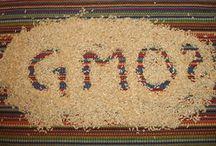 NO MONSANTO / GMO / by Irishdragonfly